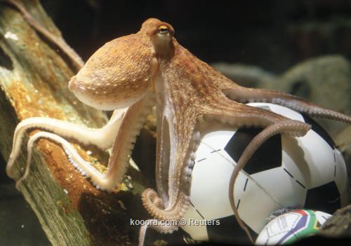 اقامة نصب تذكاري للاخطبوط بول 2010-07-09t104605z_01_wr07_rtridsp_3_soccer-world-octopus_reuters.jpg